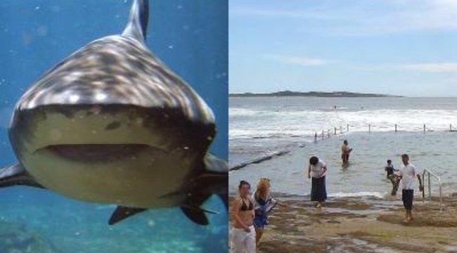 Uszodában landolt a cápa