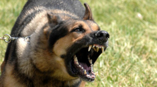 Iskolaudvaron harapdált a megvadult kutya
