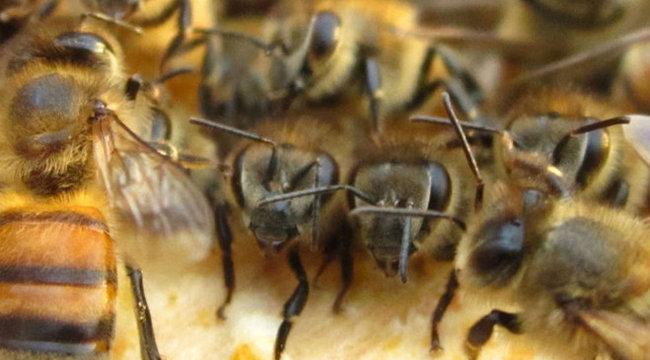 Horror: méhraj üldözte a gyászolókat