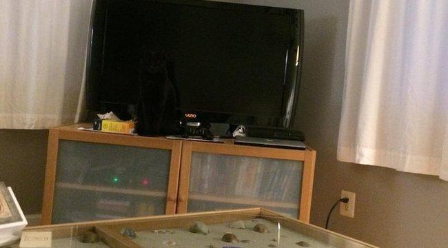 Önök megtalálják az elrejtőzött macskát?