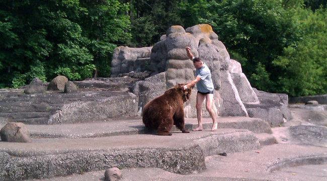 Napi hülye: leverte a medvét az állatkertben