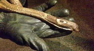 Elfogta a rendőrség a tini pikkelyes gyilkosát