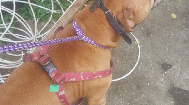 Vérfürdő: idősekre támadt egy kutya Budapesten