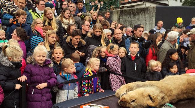 Oroszlánokat nyúztak gyerekek előtt – sokkoló fotók