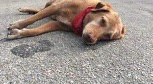 Szívszorító, ahogy ez a kutya gyászolja gazdiját