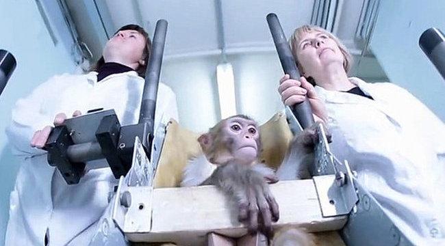 Majmokkal hódítják meg az oroszok a Marsot