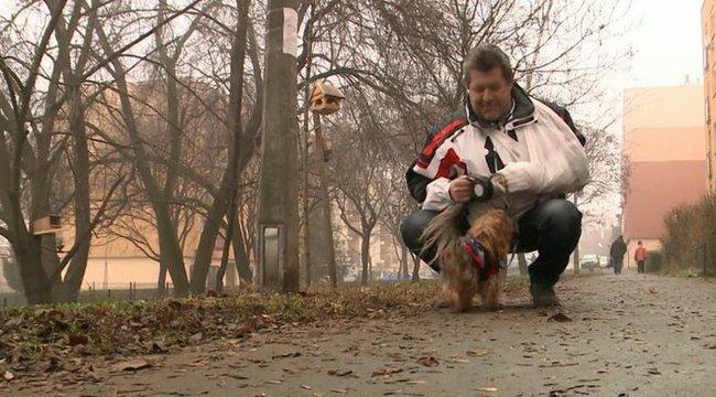 Ebüket védő gazdikat marcangoltak a kutyák