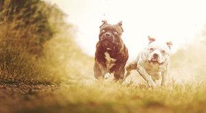 Erdészre támadt egy elszabadult kutya