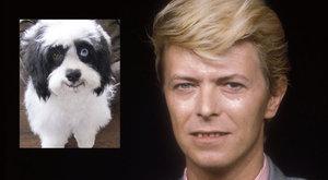 David Bowie tekintete kutyájában él tovább