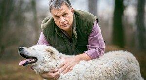 Már jut ideje a kutyákra Orbán Viktornak