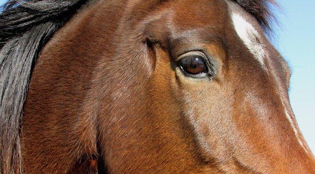 Erkélyről esett le egy ló Csobánkán