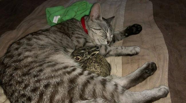 Állati! Cica a nyuszi anyukája Szarvason