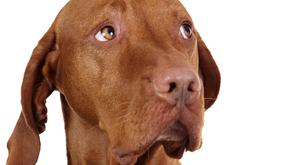 """""""Lakkozott körmű, borotvált nemi szervű kutyákhoz hívtak minket"""""""