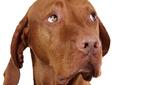 ,,Lakkozott k�rm�, borotv�lt nemi szerv� kuty�khoz h�vtak minket