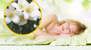 12 növény, ami segíti az alvást