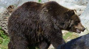 Medve ölt a nemzeti parkban