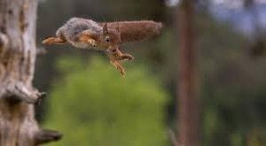 Vérszomjas mókusok juttattak kórházba egy háromévest
