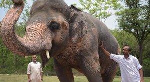 Így fordult jóra a 32 évig leláncolt elefánt sorsa - videó