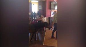 Betört a pubba, lerészegedett, de sikeresen kicsalogatták a PÓNIT