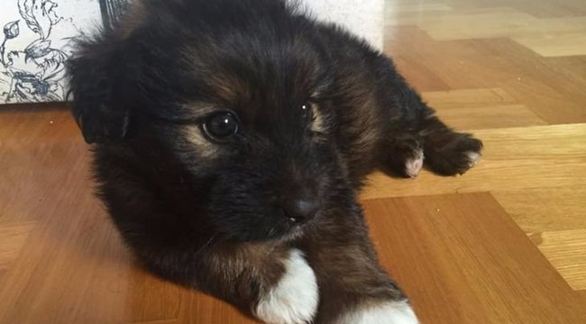 Borzalmas: Alkohollal itatta a kiskutyát a pesti hajléktalan, majdnem meghalt az állat