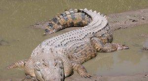 Három nap után mentették meg a krokodil elől menekülő kajakost