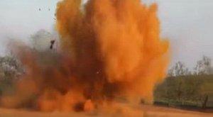 Sokkoló: levegőbe repítettek egy vaddisznócsordát a farmerek