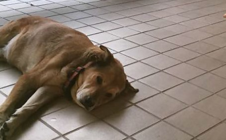Nem találja ki, mitől derült fel a 2 éve depressziós kutya