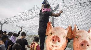 Disznófejjel küzdene a migránsok ellen a fideszes