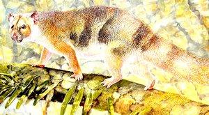 Híres természetfilmesről kapta nevét a kihalt erszényes