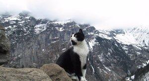 Macska mentette meg egy magyar turista életét a svájci hegyekben – videó