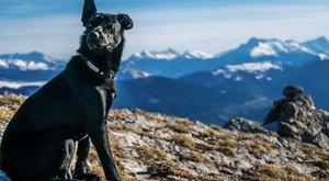 Magyar vadász puffantotta le a francia pár kutyáját