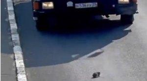 Ennek a macskának orosz védőangyala van
