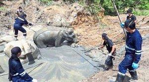 Éhen haltak az elefántok