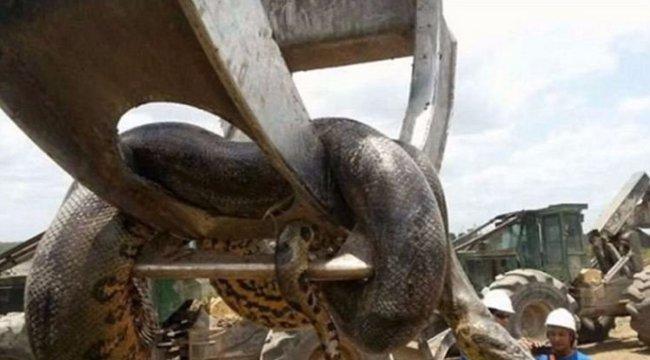 Vélhetően megtalálták a valaha élt legnagyobb kígyót