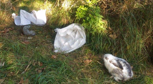 Embertelen: fehér zsákban dobtak ki nyolc nyuszit az utcára