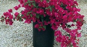 Ideje pihenni vinni a növényeket! Teleltetési kisokos