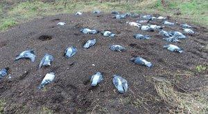 Horrorfalu: megcsonkított őzek és döglött madarak szerteszét
