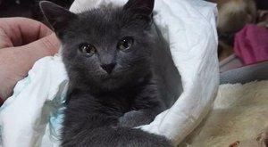 Állatkínzás Miskolcon: kitépték a cica farkát