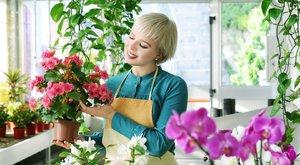 10 növény, ami kitisztítja a szoba levegőjét