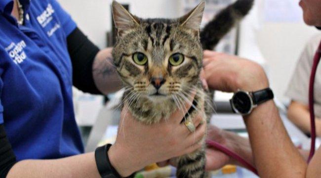 14 macskát zárt be egy házba, egy élte túl