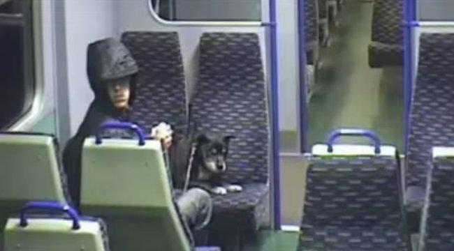 Vonaton kínozta halálra kutyáját, nyolc hónap börtönt kapott