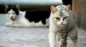 Horror: 30 éven át vezetett macskavágóhidat az állatkínzó