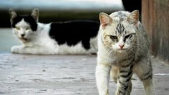 Horror: 30 éven át vezetett macskavágóhidat az állatkínzó - videó