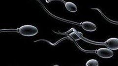 Ezt kell tennie, ha több spermát akar