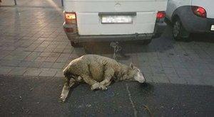 Állatkínzással vádolják a roma önkormányzati elnököt