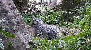 Ön szerint érdemes krokodillal szelfizni?