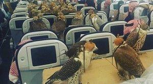 Turista osztályon repült a szaúdi herceg 80 sólyma