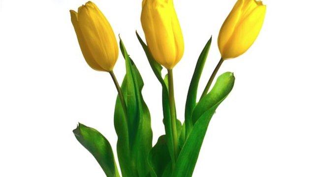 Íme néhány trükk, hogy sokáig maradjon friss a virág a szobában is!