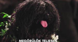 Ennél cukibb mancskérés nem volt: magyar puli szereti Zuckerberg kutyusát
