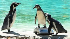 Döbbenet: lefejezték az állatkerti kedvencet
